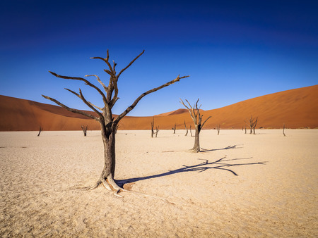 Dead trees casting shadows on the dry floor of Deadvlei, Namibia