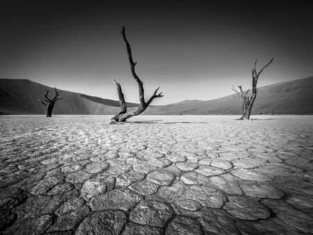 Dead trees in Deadvlei, Namibia from a very impressive perspective - black & white 免版税图像