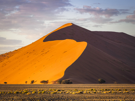 Big dune at sunrise looking impressive with comparatively small trees in the foreground Stock Photo