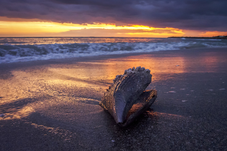 Mussel lying on a beach in Florida reflecting the amazing sunset over the sea