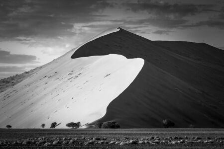 Big dune at sunrise looking impressive with comparatively small trees in the foreground - black & white 3: 2 스톡 콘텐츠