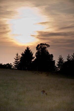 deer in field Stock Photo - 5731403