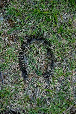 inprint: Inprint off a hourseshoe mark in grass