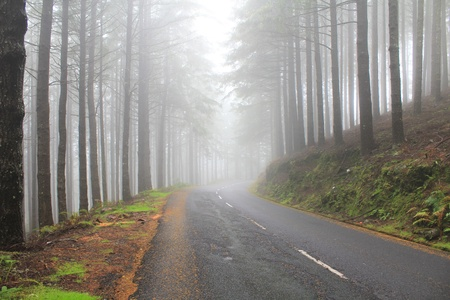Road in the clouds photo