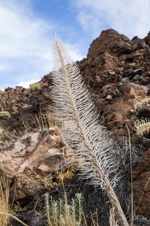Tower of jewels dry Skeleton in Tenerife, Spain