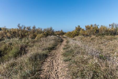 littoral: Path on the dunes of la Paracou in Les Sables dOlonne , France