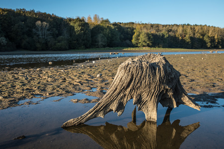 vendee: Tree stump at the lake of jaunay (Vendee, France)