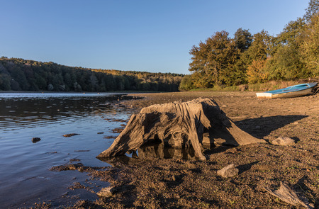 Tree stump at the lake of jaunay (Vendee, France)