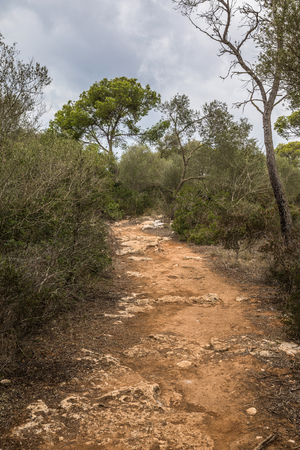 Path in the Mondrago natural park in Santanyi on Majorca island (Balearic Islands, Spain) Stock Photo