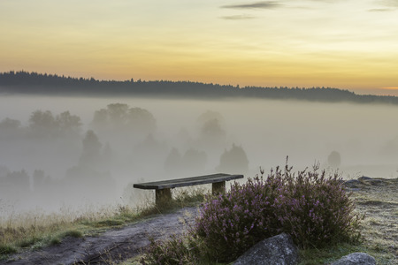 Fog in the early morning and first rays of sunshine in the nature park  nature reserve Lüneburger Heide, Germany