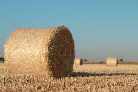 Straw rolls on the field Imagens