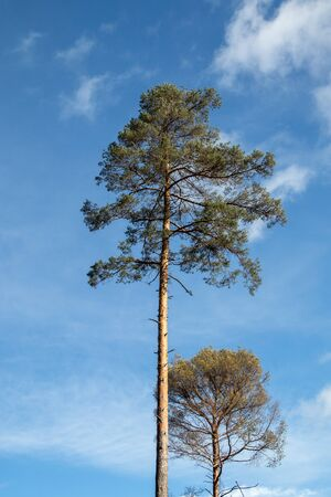 tree top with blue sky as background