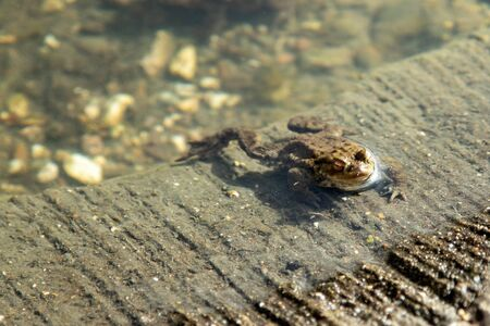 frog at the furnace of a small lake