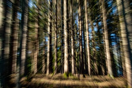 zooming photo of a view into the forest, early morning, sunbeams