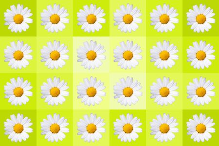 popart with twenty-four daisy blossoms on yellow colored background, wallpaper