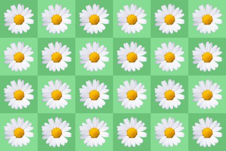 popart with twenty-four daisy blossoms on green colored background, symmetric