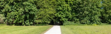 walkway in a park through trees and meadows, panorama, sunny day