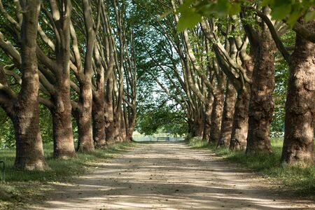 avenue of old trees in a park, this ends at an empty bench, sunny day Stock Photo