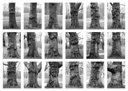 18 black and white photos of tree trunks put together into a series picture, white background Stock Photo