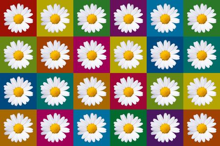popart with twenty-four daisy blossoms on different colored background