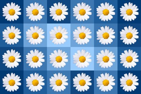 popart with twenty-four daisy blossoms on blue colored background, wallpaper