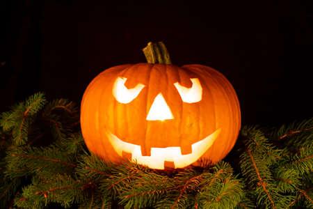 halloween pumpkin with smiling face on fir branches, four teeth. light illuminating the pumpkin from inside., black background 免版税图像