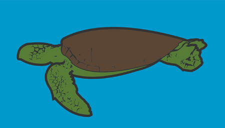 grafix: A vector drawing of a sea turtle.