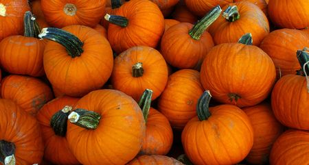 Natural organic local pumpkins, freshly picked Stock Photo - 5549960