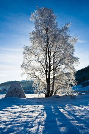 beautifull: Snow covered tree in beautifull norwegian  winter landscap Stock Photo
