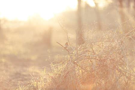 robin: robin and sunset