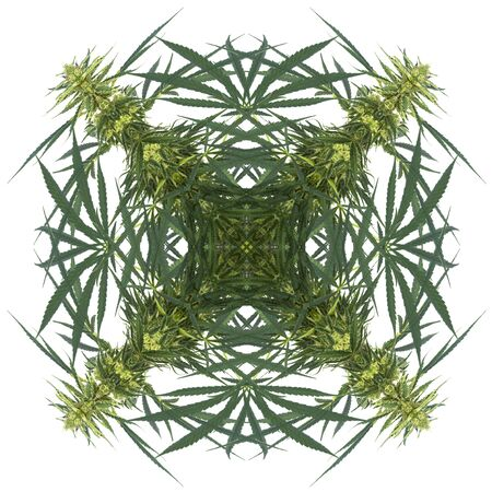 Abstract Cannabis in Kaleidoscopic Image