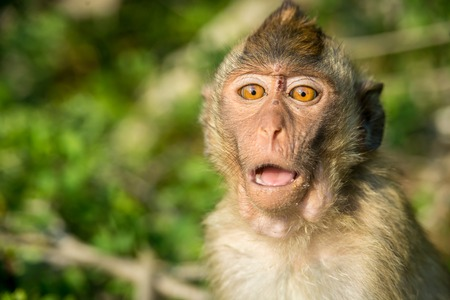 funny faces: Portrait of monkey in the wild