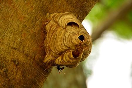 nests: Wasps build nests