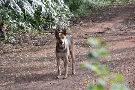 vigilance: Dog vigilance danger