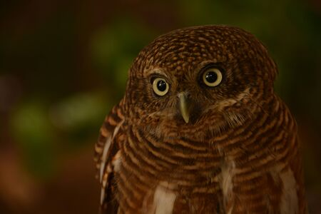 Owls are looking blur background Stock Photo