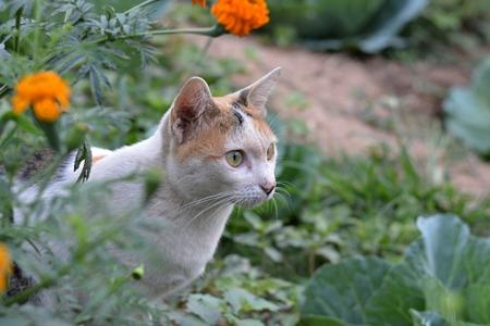 catnip: Cat in a flower garden, a natural backdrop.