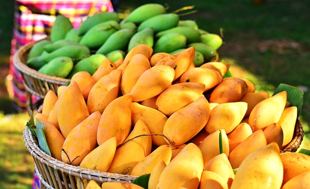 Mango basket in the background blur. The focus on the front