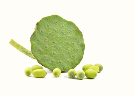 Lotus and seed on a white background. Stock Photo