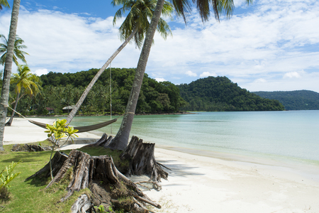 The beauty of the beach and the sea.,The coconut trees and stumps are the front.