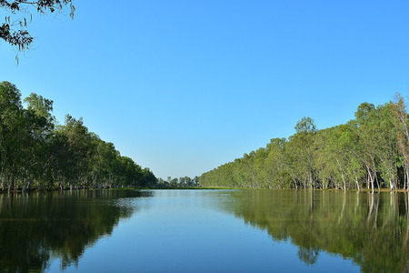 Eucalyptus was born on the banks of the stream.There is a reflection in the water.Blue sky is the background.