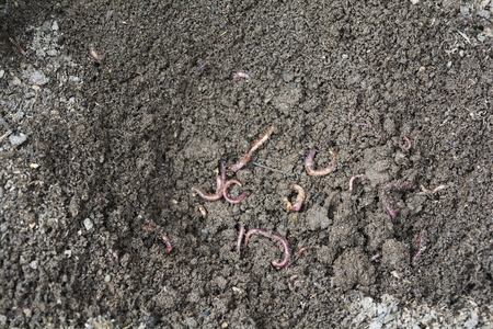 Farmer In winter, worms will rest, they will not eat.