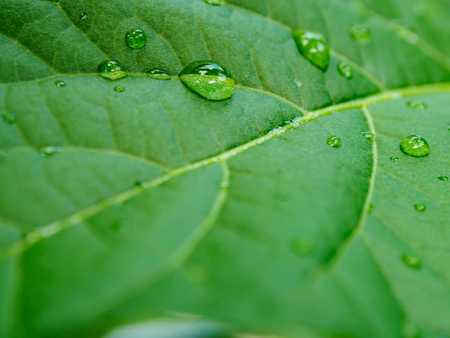 leaves with water drops Banco de Imagens - 100215824