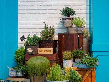 fresh flowers and potted plants on sale.