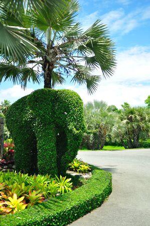elephant tree in the park