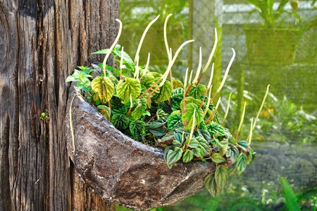 wooden bench with plant in pots Stock Photo - 11136448