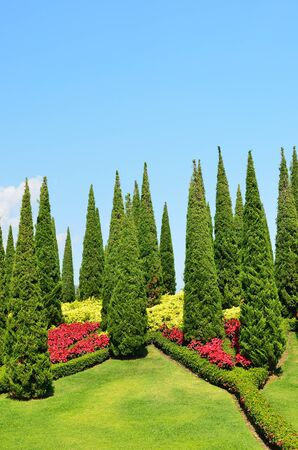 Beautiful garden with small pine trees photo