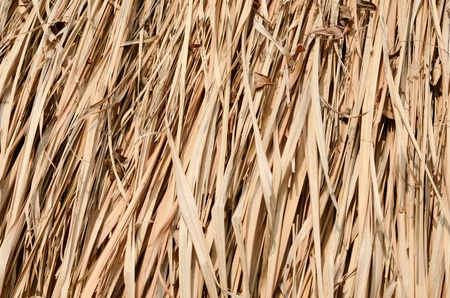 Closeup texture of thatch roof for background