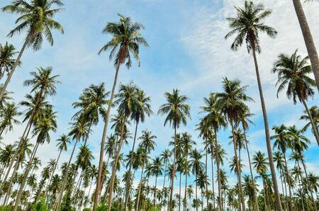 Jungle palm trees in the blue sky
