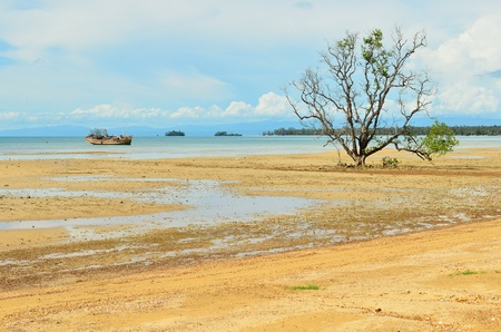 Alone mangrove tree grows in the shallow water Stock Photo