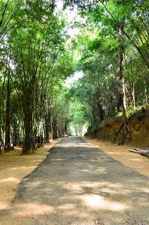 Walk way through the green forest  photo